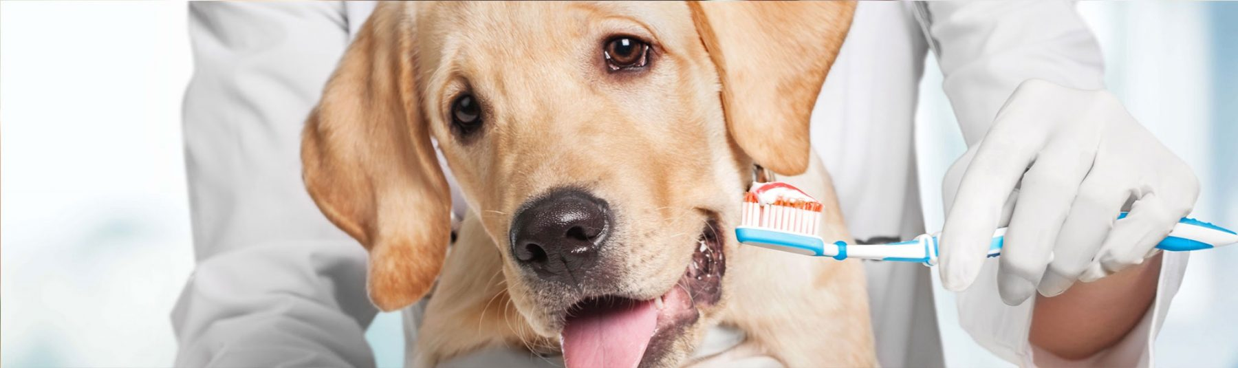 dog-dental-service