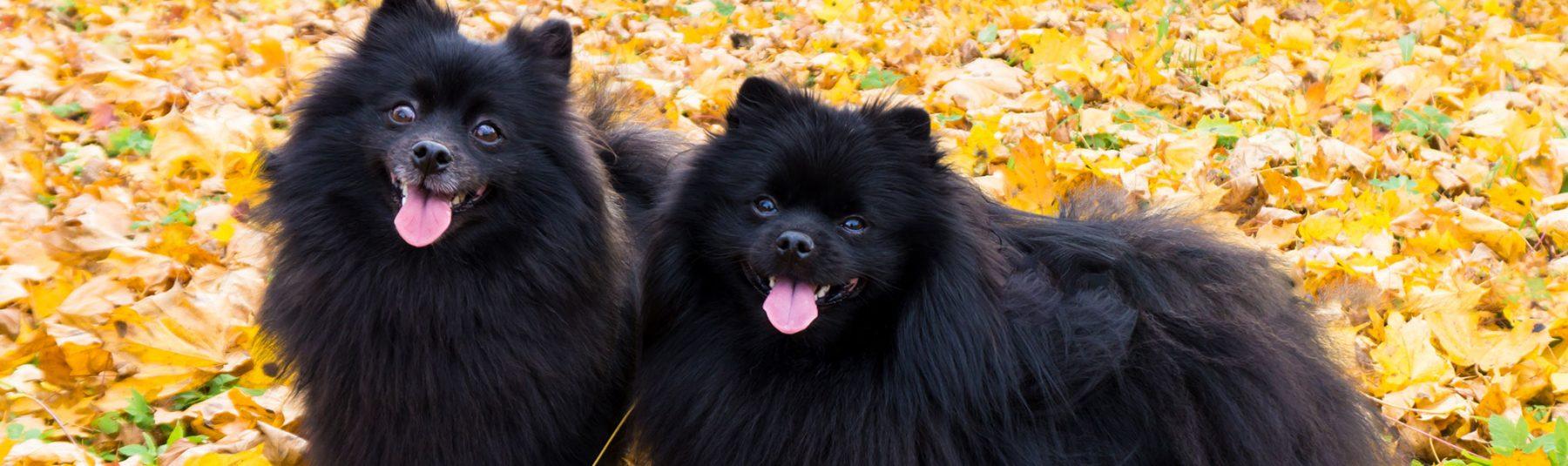 dog-family
