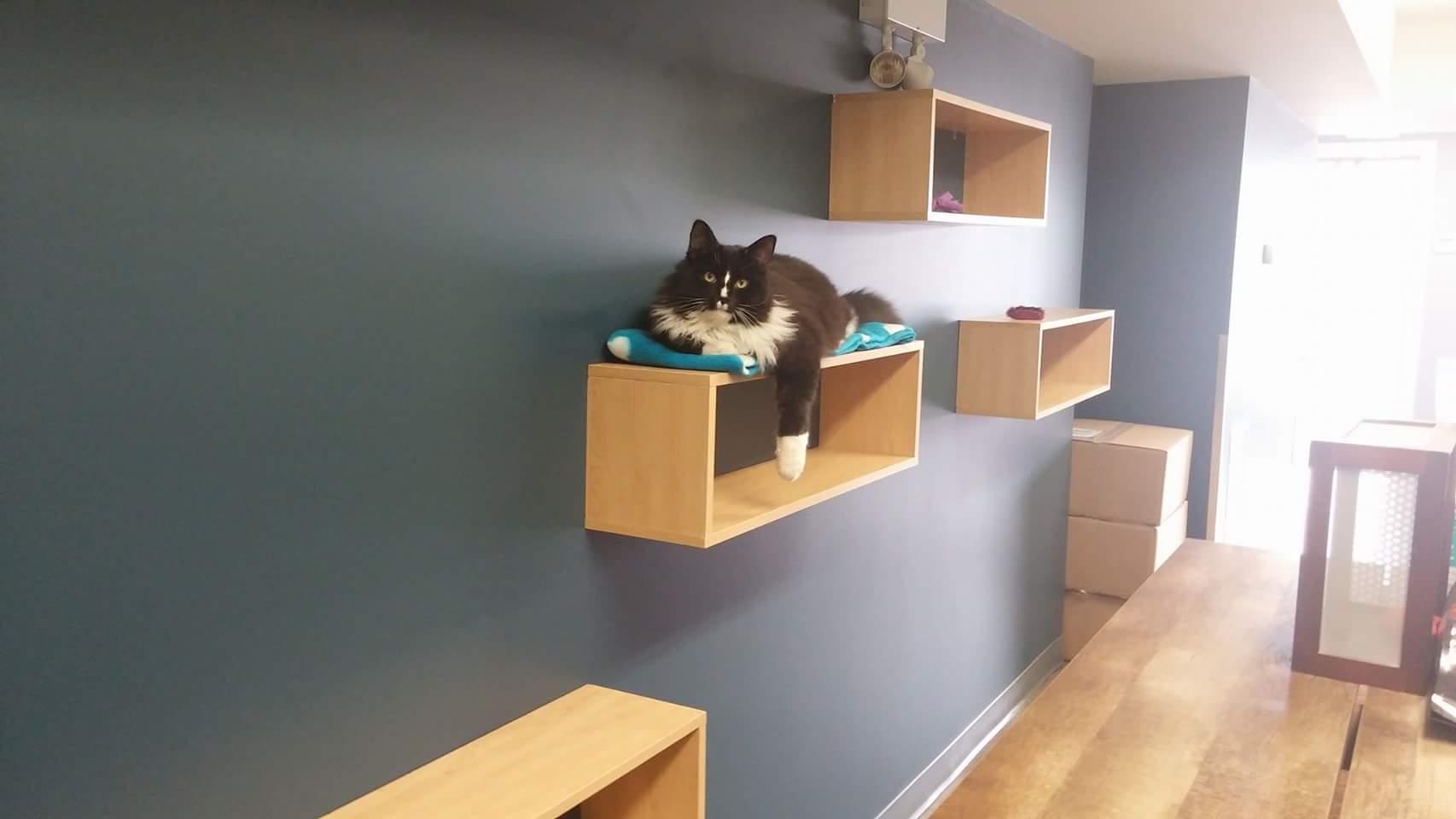 clinic-cat