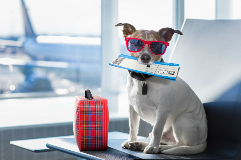 Travelling with Your Pets During the Holidays