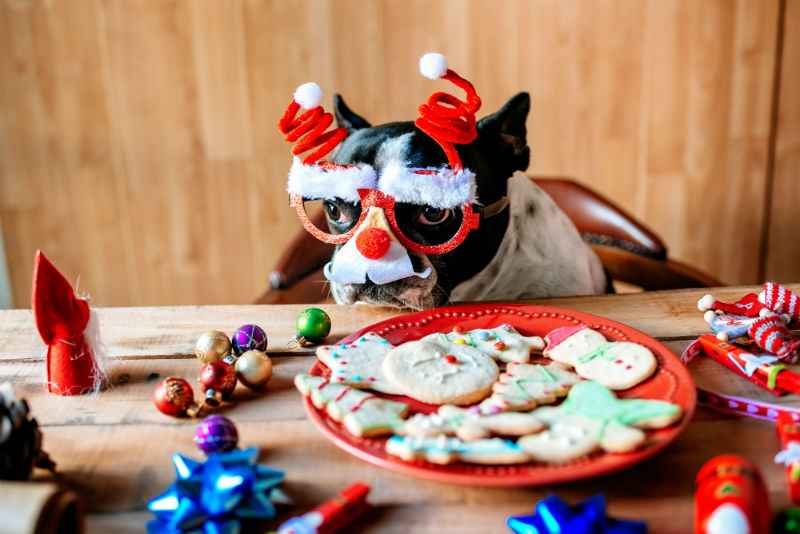 Tips of Holiday Gifts for your Pets