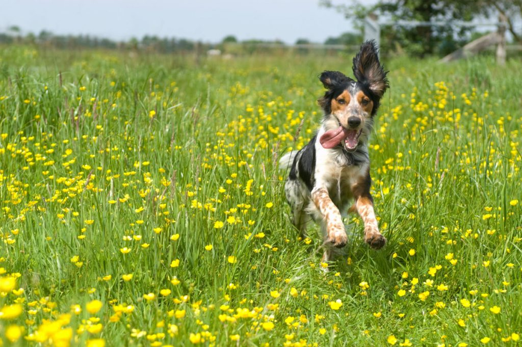 Dog Playing in a Field with Flowers